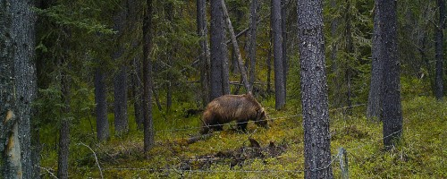 Clearwater (BMA 4) Grizzly Bear Population Inventory