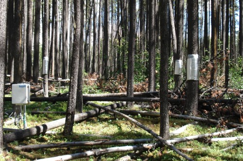 Assessing the effectiveness of Alberta's forest management strategies against the mountain pine beetle