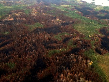 Historical Wildfire Burn Patterns at Sub-Landscape Scales