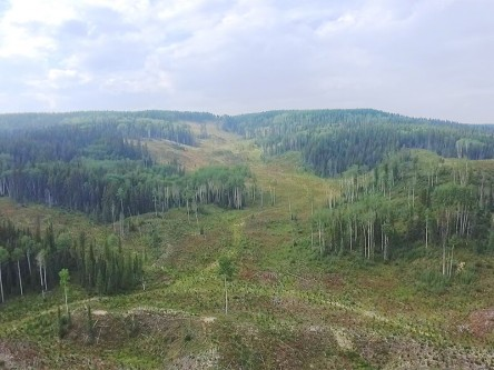 Impacts of New Forestry Approaches on Grizzly Bear Habitat Use and Movement
